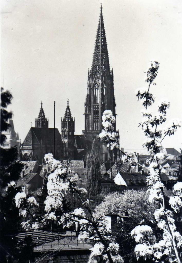 Münster_Blütenmeer